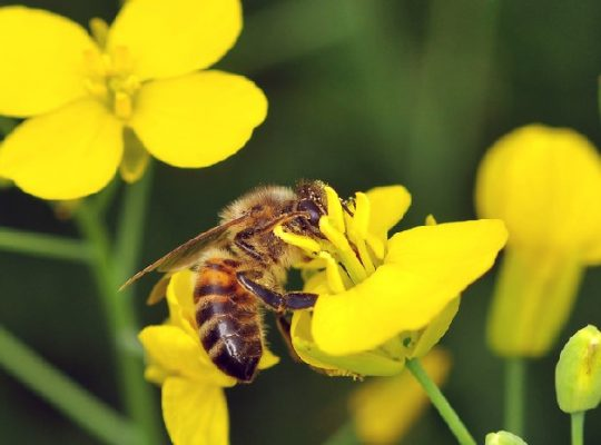 Insecticide on Bees